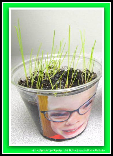 photo of: Spring Science Experiment with Grass Seeds at Kindergarten Rocks via RainbowsWithinReach
