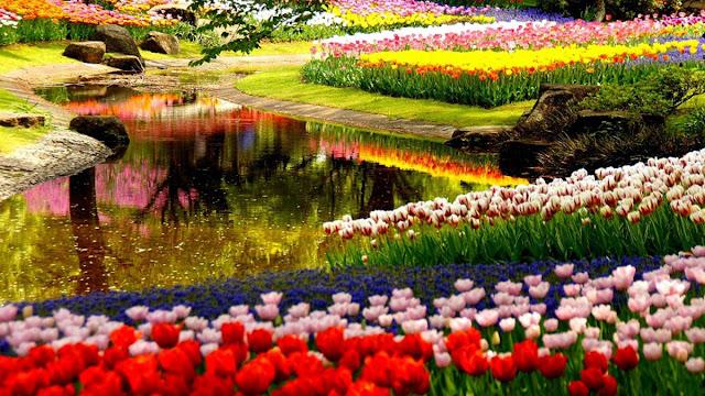 Công viên cảnh quan dự án Lavila Kiến Á lấy cảm hứng thiết kế từ công viên Keukenhoff Hà Lan.