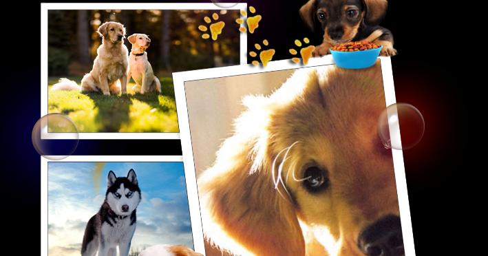 Uskrzydlone Wiersze Jak Tu Nie Kochać Psa