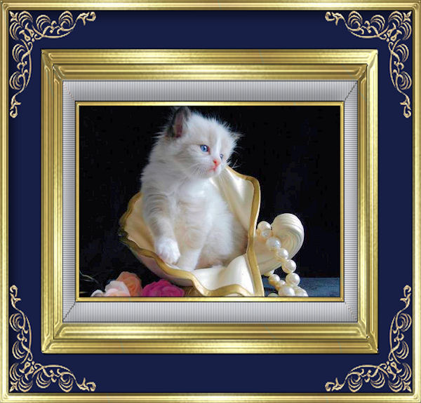 62a24d1697491 القىء عند القطط vomiting in cats