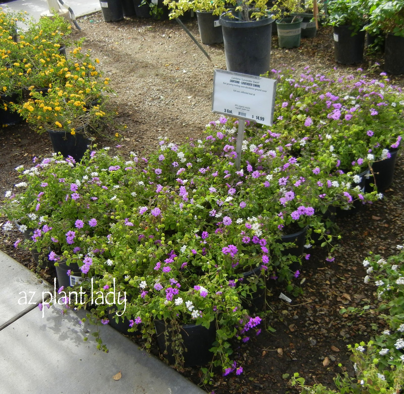 Designer Plants Without The Designer Price Ramblings From A