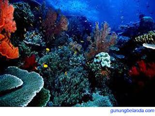 Apakah Taman Laut Bunaken Berada di Sulawesi Utara