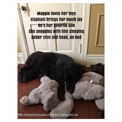 Dogs and Toys - Tanka Poem