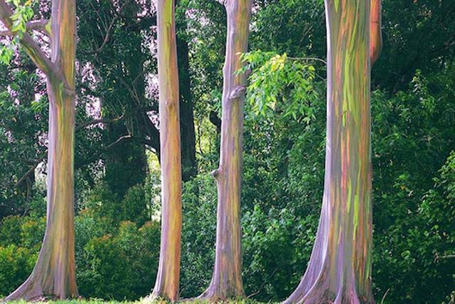 https://downloadfotofb.blogspot.co.id/2016/05/rainbow-tree-hd-photo-download.html