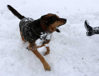 Rambo and A playing in the snow