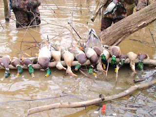 north texas duck huting/north texas duck hunts/north texas dog training/north texas dog trainers