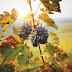 Podróż przez słynny szlak winnic w południowej Austrii