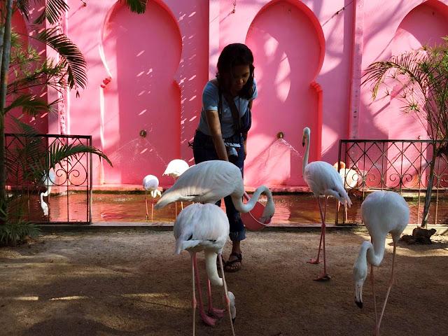 Backpacker Murah ke Thailand : Hari Kedua Menuju Hua Hin dari Bangkok (Santorini Park & Camel Republic)