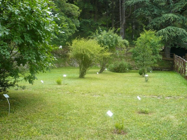 orto botanico nel bioparco dei Frigoli