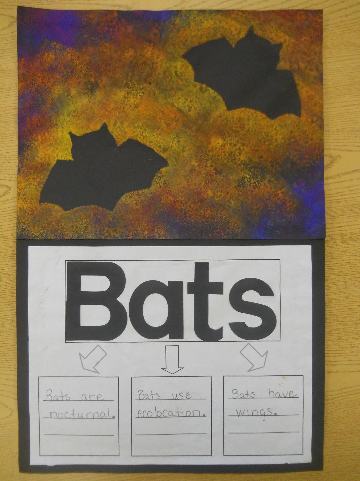 Mrs T S First Grade Class All About Bats