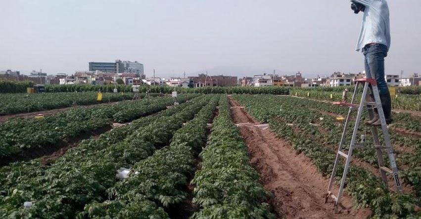CIP ofrece 20 Becas para estudiantes e investigadores de ciencias agrarias
