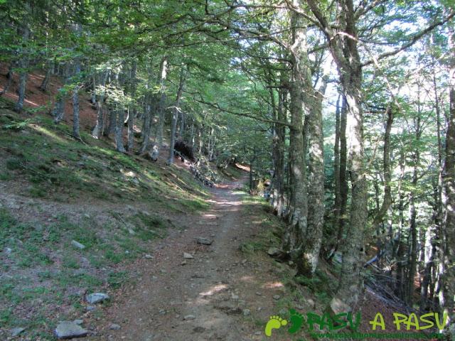 Hayedo subiendo al Alto Piedrafita desde Llananzanes