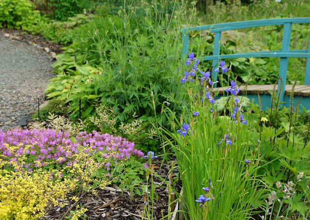 There is so much colour here in the nursery at this time of year and plenty inspiration  for visitors and customers