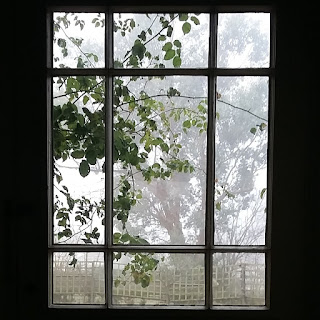 Picture of our back door, with a climbing rose seen through the glass panes