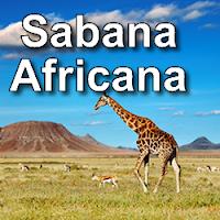 sabana,africa