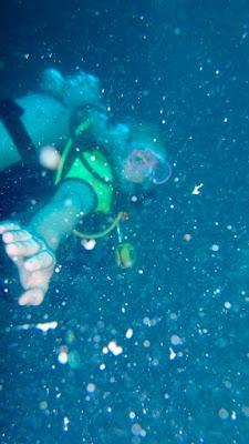 Beste Tauchplätze Phi Phi Island