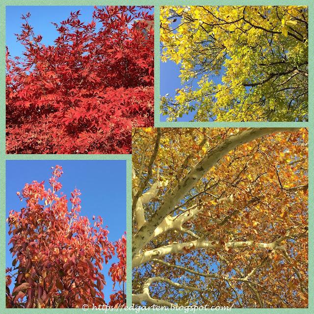 Herbstblätter im Dorf