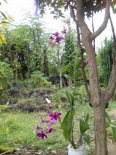Bunga Paling Indah