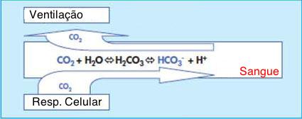 valores normales de ph bicarbonato y co2