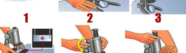 Langkah menggunakan mikroskop dengan baik