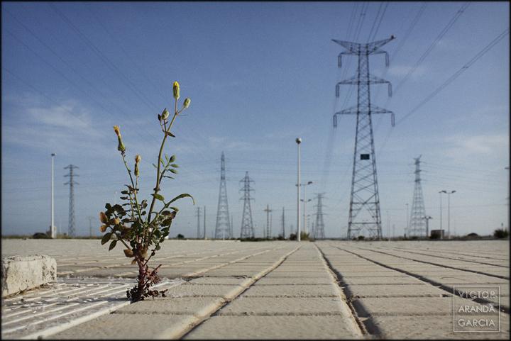 fotografía, naturaleza urbana, Sagunto, serie