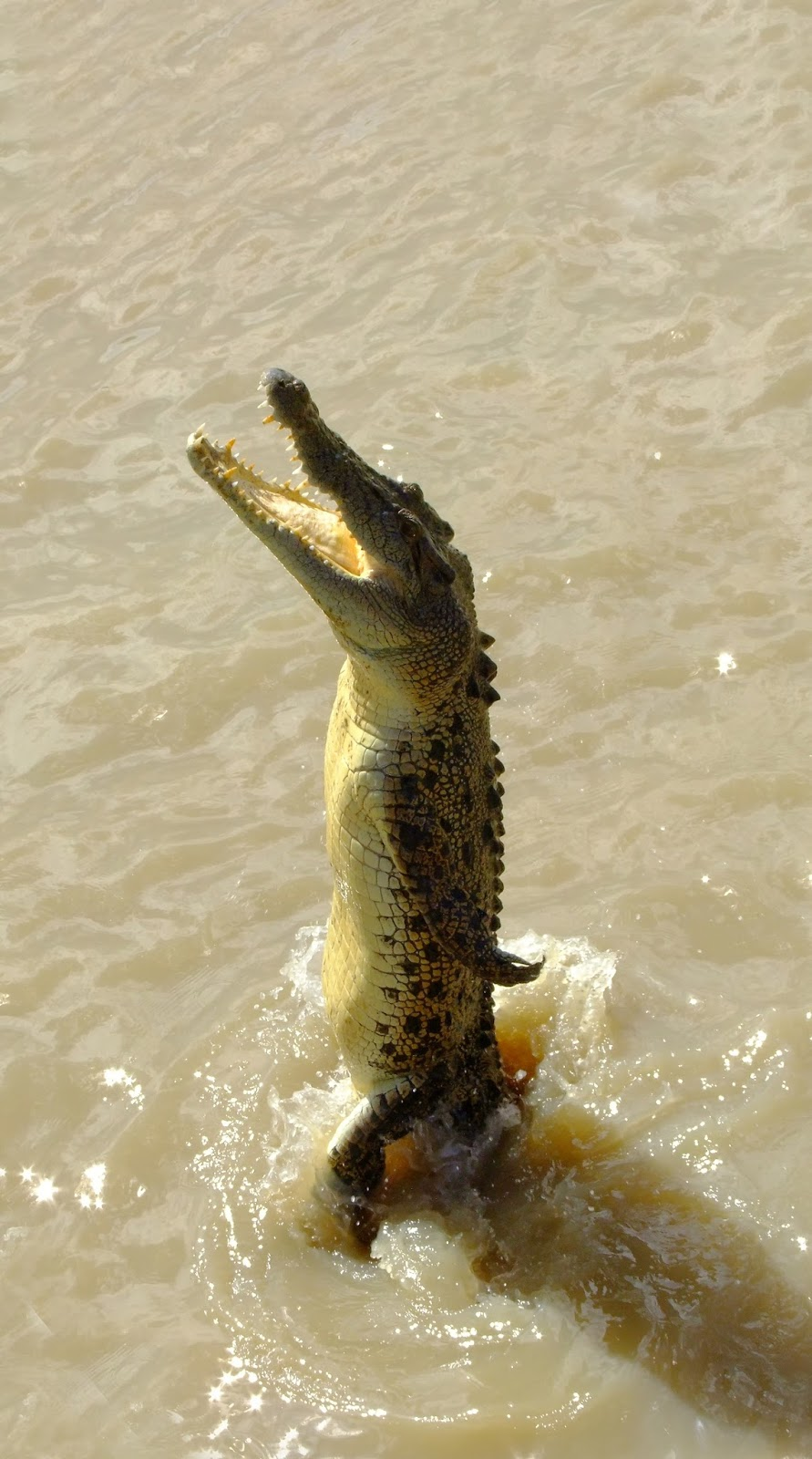 Amazing shot of a crocodile standing.