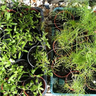 gardening, problems corners in the garden