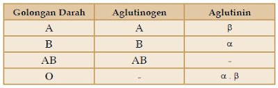 Tabel Aglutinogen dan Aglutinin pada Golongan Darah