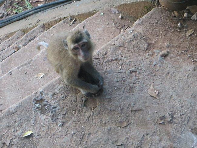 Милая обезьянка смотрит на меня