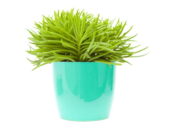 28 Small Plant In A Nutshell Stock Photos Image