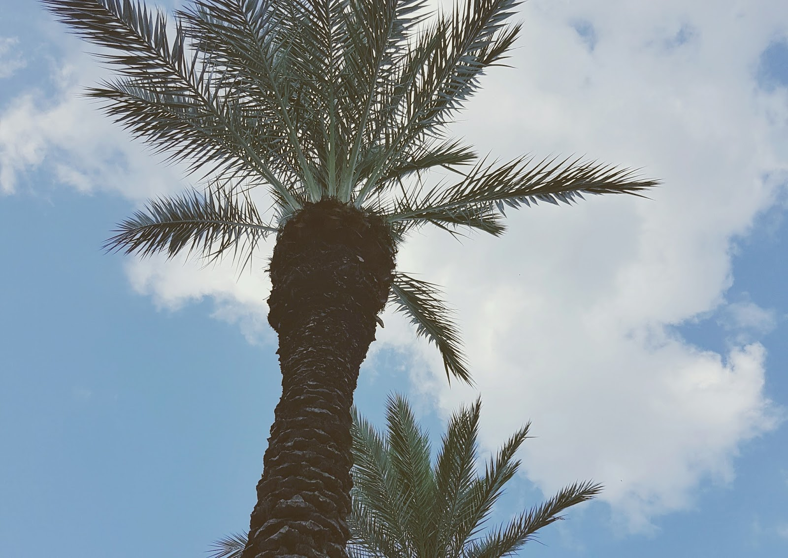 New Orleans, travel, summer, hot, palm trees, vacation