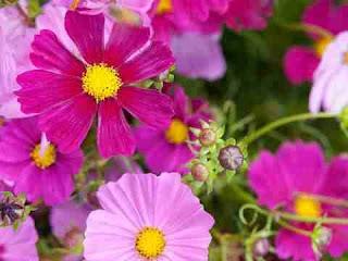 सपने में फूल देखना sapne mein flower dekhna