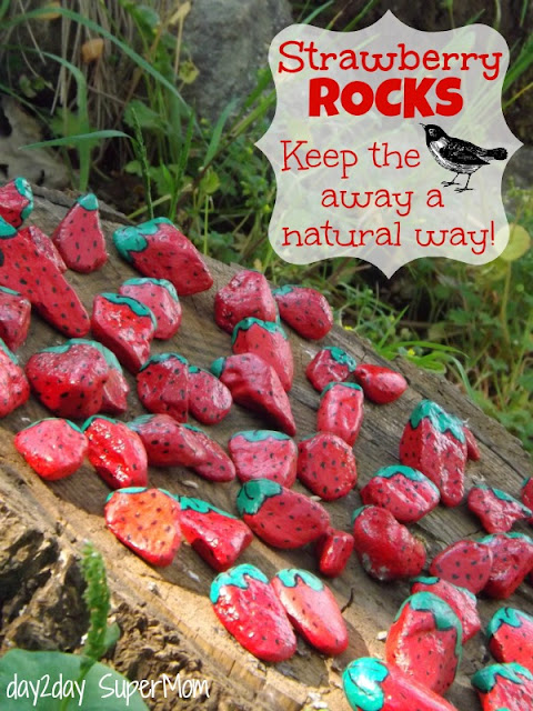 Strawberry Rocks Diy- Keep away the birds naturally