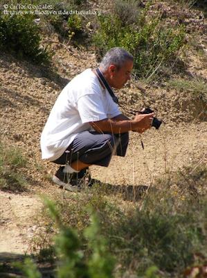 http://www.biodiversidadvirtual.org/insectarium/Pretesting-para-una-excursion-%28Punto-BV-Espacio-Pirineos-de-Graus%29-I-img505135.html