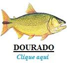 Peixe, Dourado