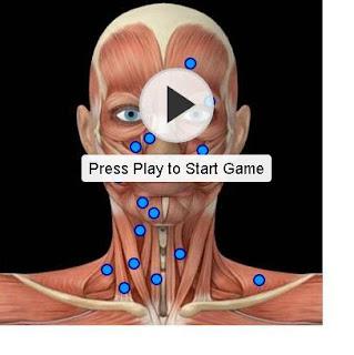 musculos da face e pescoço