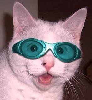 Gambar Ekspresi Kucing Lucu Pakai Kacamata Warna Hijau