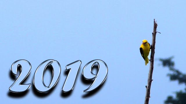 happy new year 2019 4k images
