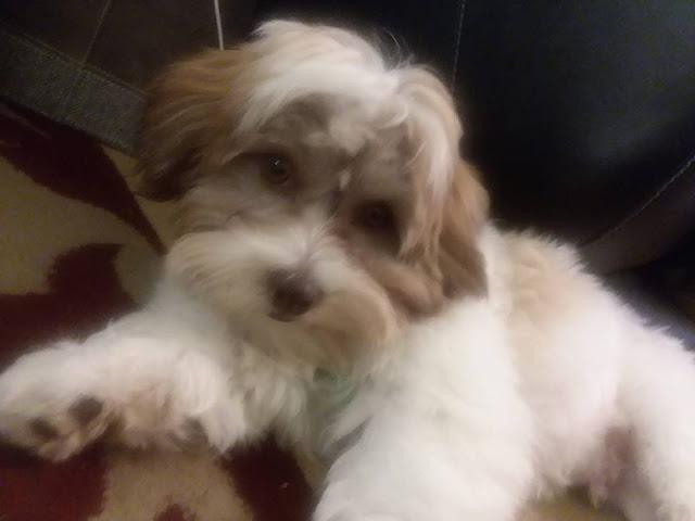 puppy, planner