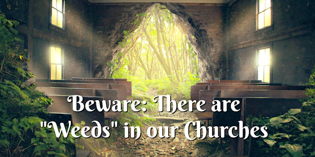 "Matthew 13 warns us about ""weeds"" in the church. We must know and teach Scripture."