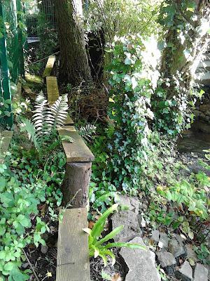 Childrens boardwalk in woodland garden with ferns