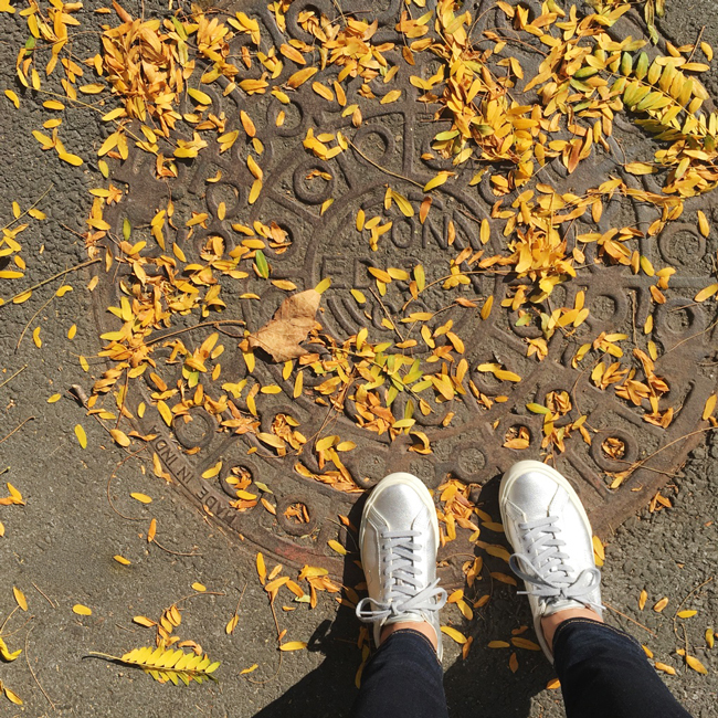 Autumn in New York, Autumn, The Five Senses Of Fall, Autumn, Fall Is my favorite season