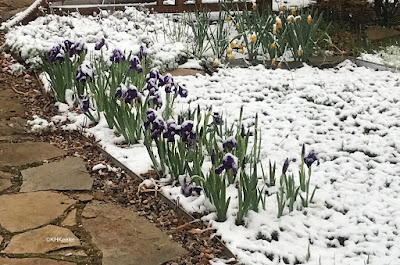 snow May 9, 2019