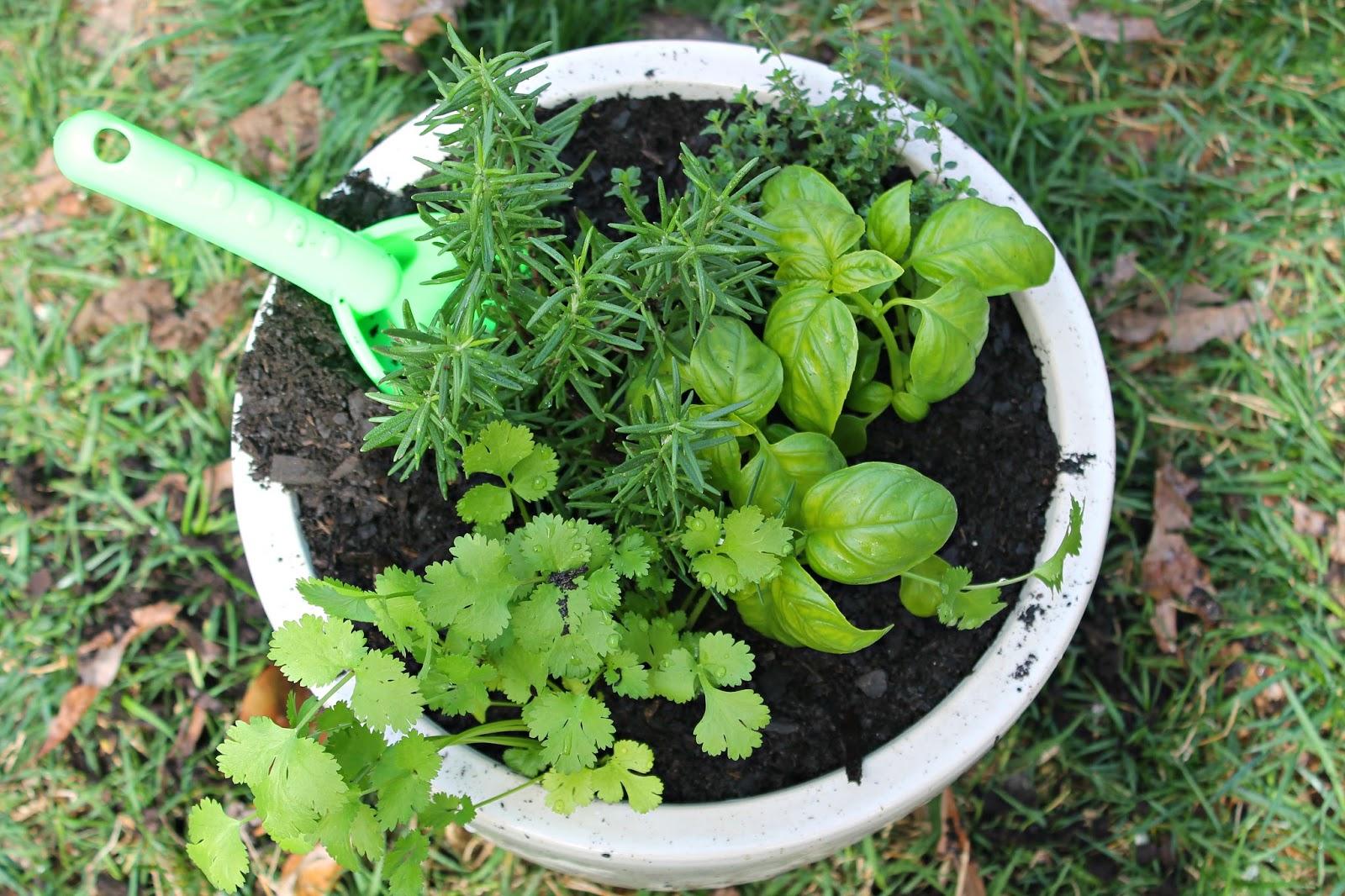 Thyme for Herbs (Caroline's 1st Garden)