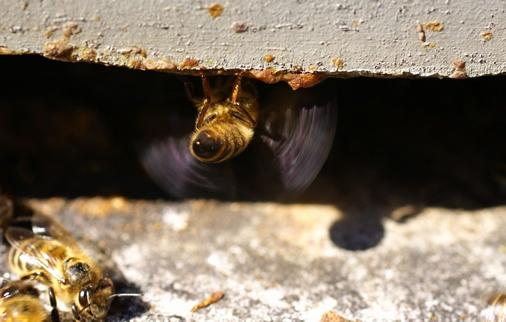 Παράγοντες που προκαλούν στρες στις μέλισσες
