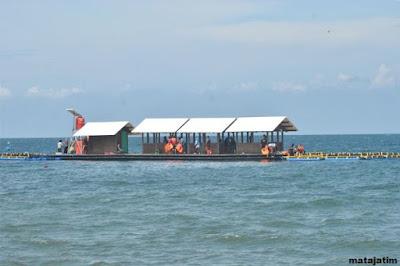 penangkaran hiu di pantai brangsing banyuwangi