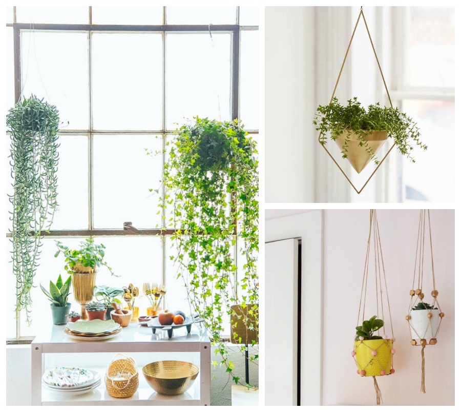 Deco con plantas de interior blog de decoraci n diy for Como decorar mi jardin con plantas