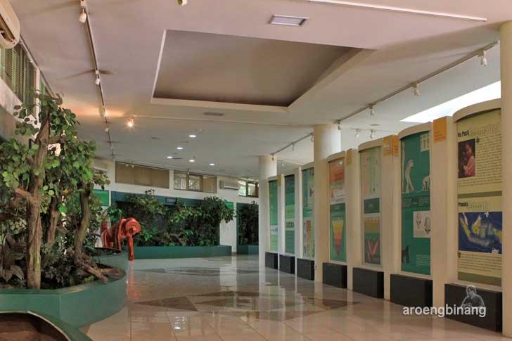 pusat pendidikan primata kebun binatang ragunan jakarta