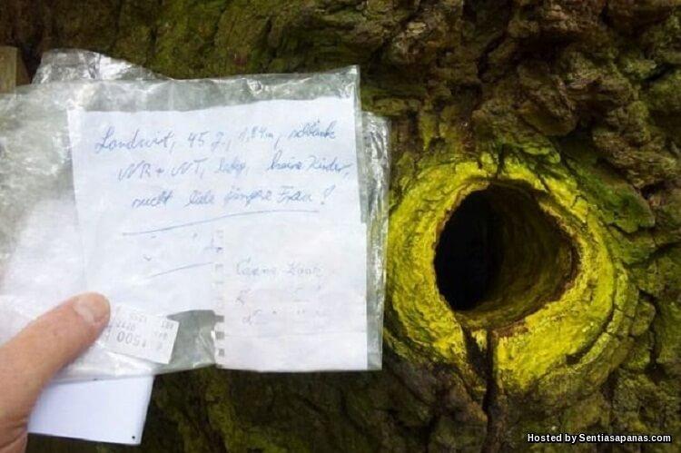 'Bridegroom Oak' Pokok Berusia 500 Tahun Jadi Pusat Cari Jodoh