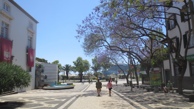 Funchal: Blühende Jacaranda-Bäume und die Silhouette im Hintergrund